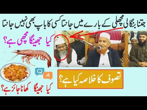 Jhinga Machli Ha|Jhinga Khana Jaiz Ha|jhinga Fish Halal Ha|Tasawwuf Ka Khulasa By Makki Alhijazi Q&A