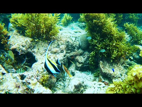 Snorkeling and swimming with the fish in Seychelles with Lev