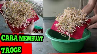 Cara membuat taoge tanpa buntut /how to grow mug bean sprouts at home