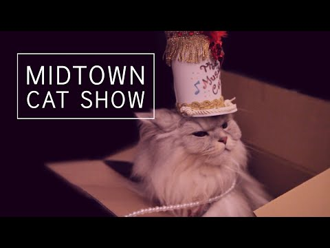 Algonquin Hotel Cat Fashion Show Takes On Musical Theater