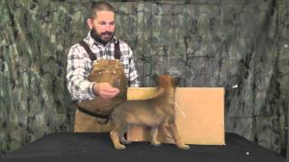 Malinois Puppy Training Lesson Two