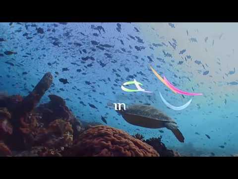 Luxury Eco Dive Resort in Wakatobi National Park, Indonesia