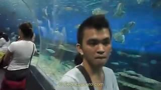 Manila Ocean Park | Cedric Lucero