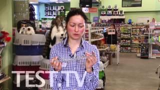 TEST.TV: Ошейники для собак: как выбрать нужный?
