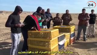اسرار سباقات الحمام الزاجل في مصر