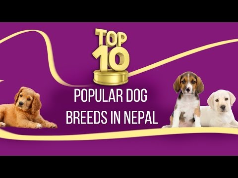 TOP TEN POPULAR DOG BREEDS IN NEPAL