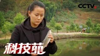 《科技苑》 20180108 又挑剔又娇贵 这鱼竟然养成了 | CCTV农业
