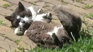 Кошка избалованная любовью!