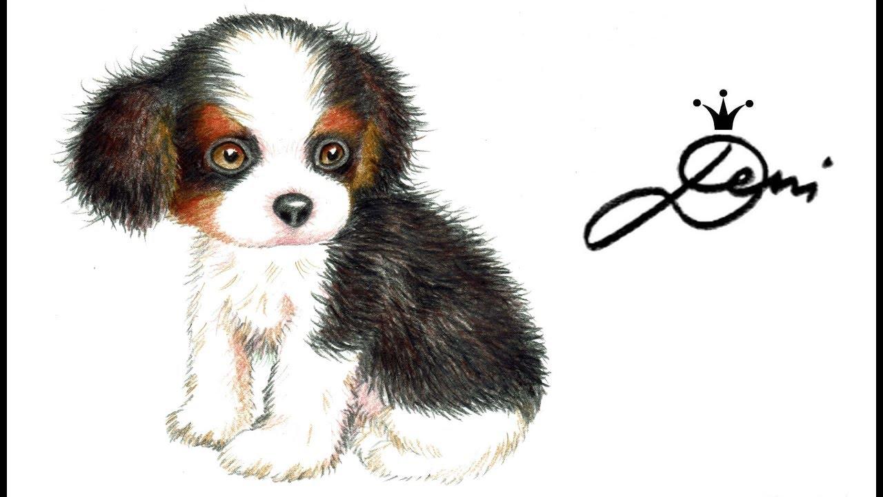Hund Zeichnen Cavalier King Charles Spaniel Welpe Malen Dog Drawing How To Draw A Puppy куче 狗