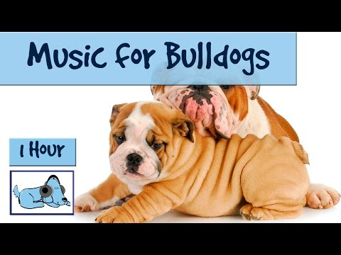 Music For Bulldogs! 1 Hour of Relaxation Music to Calm Down Your Bulldog!