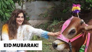Live From House | Eid Mubarik | My Family | Rambo | Sahiba | Lifestyle With Sahiba