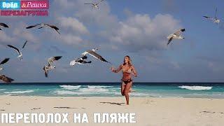 Канкун. Переполох на пляже! Орёл и Решка. Перезагрузка