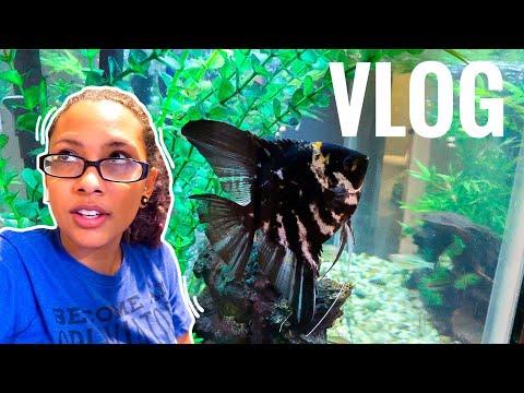 Cleaning My 55 Gallon Fish Tank - Vlog 11
