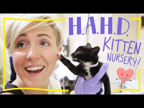 H.A.H.D: ASPCA Kitten Nursery!