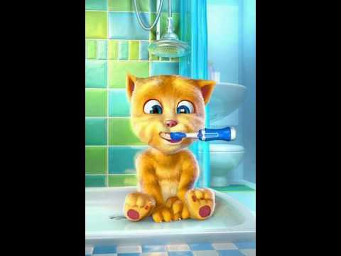 Macja Ginger Qe Flet Shqip