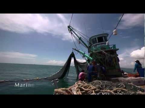 International Maritime Organization 2011