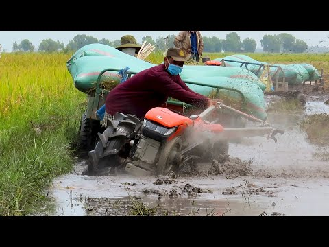 Tractor Kubota ZT140 Transport Rice Stuck In Deep Mud / គោយន្តដឹកស្រូវជាប់ក្នុងភក់ជ្រៅ