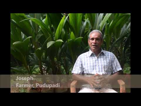 A day in the life of an organic farmer, Green Valley Farmers Service Centre, Puduppady - By IIM K