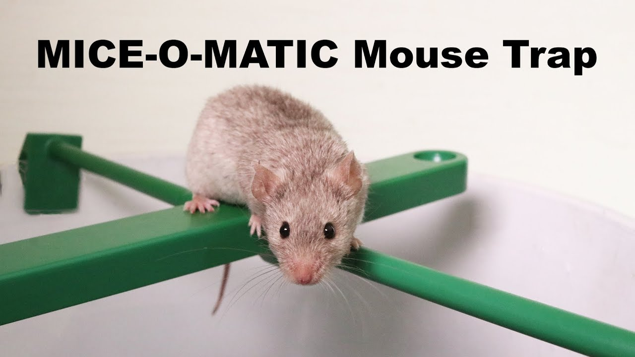 the-mice-o-matic-bucket-mouse-trap-mousetrap-monday