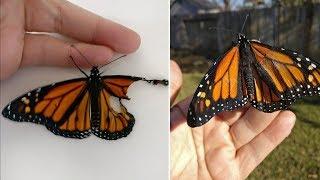 Когда девушка нашла эту бабочку со сломанным крылом то пришла к самому вдохновляющему решению