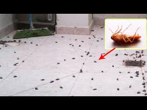 От ТАРАКАНОВ не останется и следа ✔️3 МОЩНЕЙШИХ способа избавиться от любых насекомых