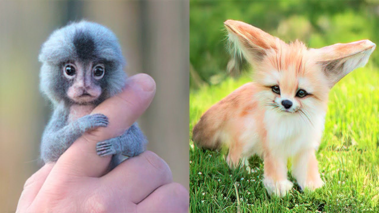 Download 15 Cutest Exotic Animals You Can Own As Pets
