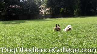 Walter Dog Obedience Video Memphis