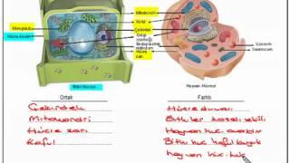 6.Sınıf Fen Bilimleri  Dersi Hücre Konusu