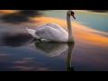 Miniature de la vidéo de la chanson Sonata In G Major For Piano, D.894: Iii. Menuetto. Allegro Moderato - Trio