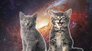 enjoykin enjoyker space cats — magic fly