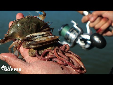 Fishing Bait Showdown: Which Bait Works Best? (Crabs Vs Clams Vs Worms)