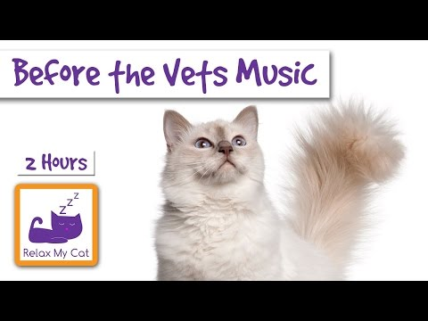 Relax and De-Stress Your Cat Before Visiting The Vets! 2.5 Hours of Relaxing Music for Cats!