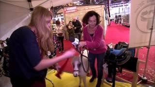 Video Salon du cheval 2015 - Shetland nain et son équipement download MP3, 3GP, MP4, WEBM, AVI, FLV Juli 2018