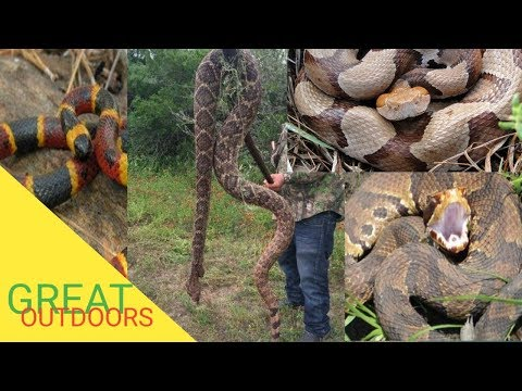 Florida's huge snake population part 4 venomous snakes