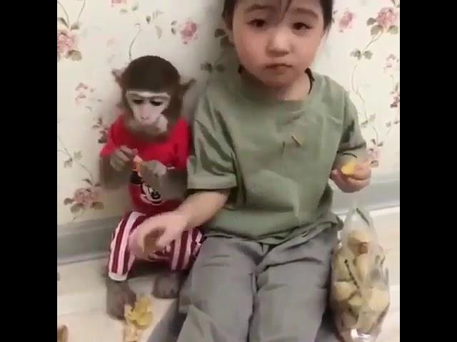 Maymun ve çocu?un yemek kavgas?????