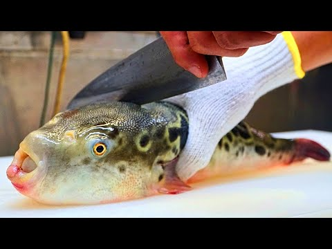 JAPANESE STREET FOOD - Poisonous Fugu (DON'T TRY THIS AT HOME!) Street Food in Tokyo Japan