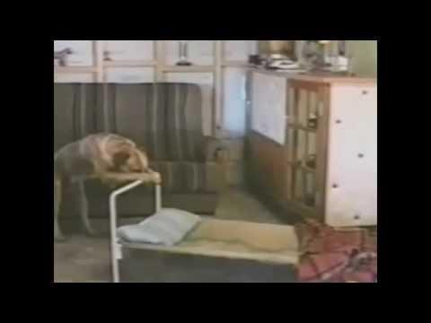 QUEBRANDO O NARIZ DA MENINA COM UM SOCO from YouTube · Duration:  18 seconds