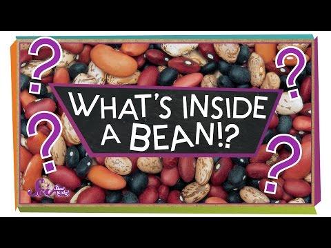What's Inside A Bean? - #sciencegoals