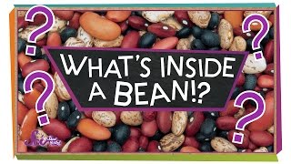 What's Inside a Bean? - #sciencegoals