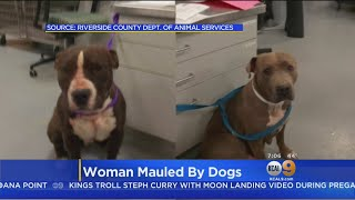 Owner Of Dogs Suspected Of Mauling Woman Arrested Over Outstanding Warrant