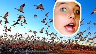A DEADLY SWARM OF BIRDS