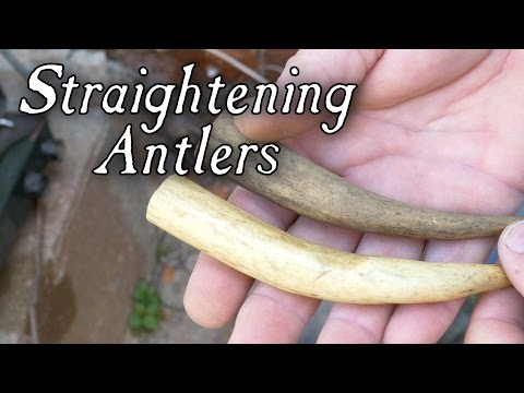 Straightening Antlers and More - Q&A