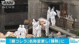 「豚コレラ」改め「豚熱(ぶたねつ)」に 農水省(20/02/06)