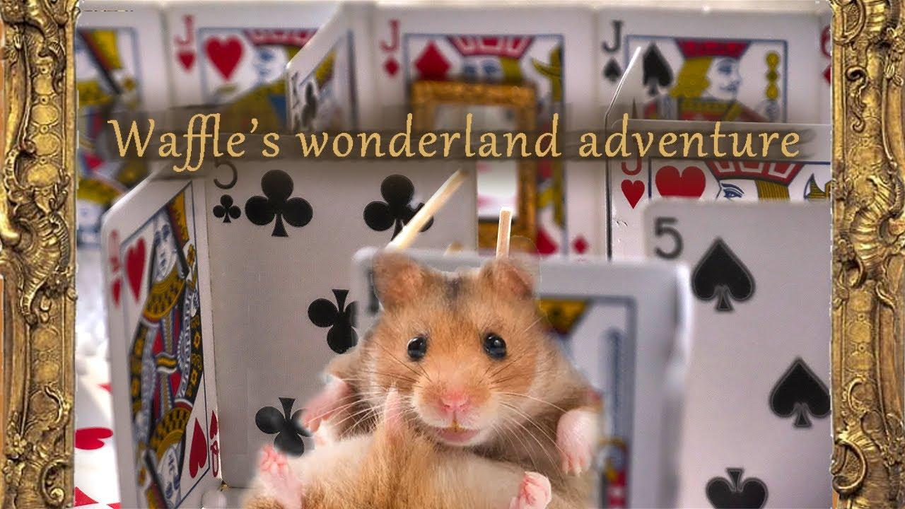 Waffel Wonderland