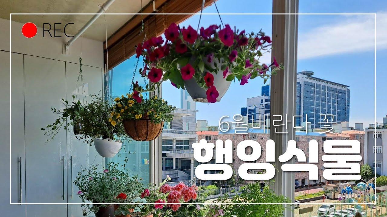 베란다 행잉식물(1),6월 베란다 꽃