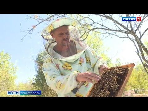 Вопрос: Почему в 2020 году в Башкортостане будет рекордно низкий урожай мёда?