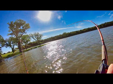 Catching Catfish In EXTREME Shallow Water (Crazy Action)