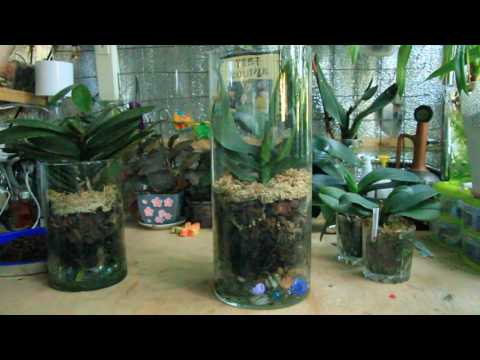 Орхидеи в закрытой системе