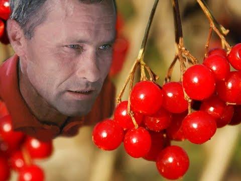 Игорь Слуцкий Калина красная