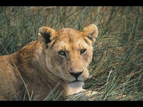 Avventure nel Mondo video del viaggio intero in Tanzania Selous Game Reserve Pistolozzi Marco